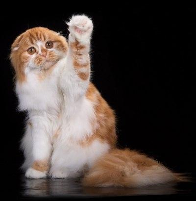 Конкурс кошек на радио дача калуга