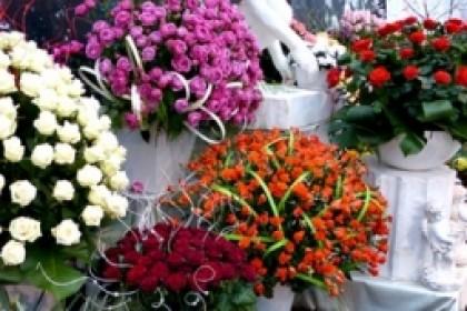 Галантус калуга купить розы какой первый подарок дарить своей женщине