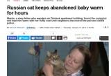 Кошка, согревшая подкидыша в Обнинске, стала звездой мировых СМИ