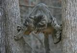 Как спасали кота, пять дней просидевшего на дереве. Подробности спецоперации