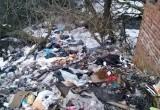 Стало известно, кто ответственен за свалку трупов животных рядом с детским садом