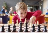 В калужских школах на физкультуре будут учить шахматам