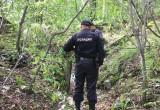Приемная мать убила ребенка и закопала труп в лесу
