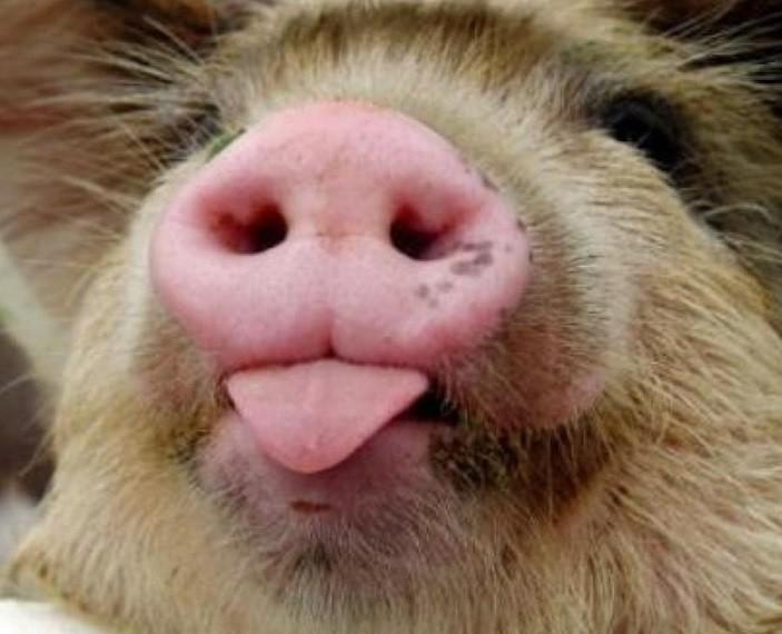 Экс-сотрудников калужской колонии осудят замахинации споставками мяса
