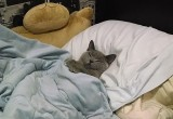 Любитель поспать чуть не заморозил весь дом