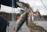 Состоялся суд над калужским рыбаком-браконьером