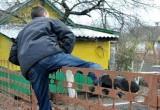 Деревенский гость обокрал частный дом