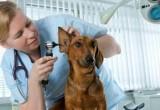 Цены в ветеринарных клиниках приведут к единому образцу