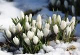 В Калуге ожидается до восьми градусов мороза!