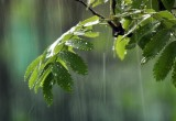 Дожди и грозы принесут в Калугу похолодание