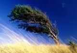 Калужан предупреждают о сильном ветре!