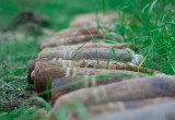 На огороде в калужской деревне нашли схрон артиллерийских снарядов