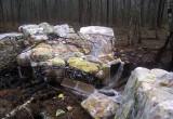 Залежи лапши нашли в лесу