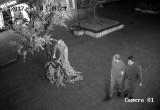 Калужане опознали вандалов, сломавших в центре Калуги дорогую сакуру. Фото