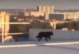 Рискуя жизнью, калужане спасли собак, бегавших по крыше здания