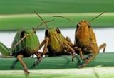 В калужском кафе клиентов кормили червями и тараканами!