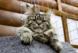 Подмосковных кошек замучили в калужском контактном зоопарке