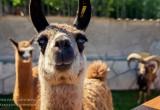 Новый зоопарк в Калуге ждет своих посетителей