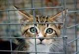 Калужане переживают за кошек на контактной выставке