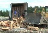 В Калужской области уничтожено почти 20 тонн санкционных яблок