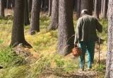 Грибник, заблудившийся в калужском лесу, забрел в соседнюю область