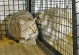 Редких диких животных продавали в Интернет-магазине