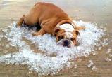 Выходные дни в Калуге будут очень жаркими