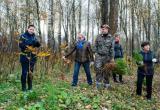 План восстановления лесов в регионе перевыполнен почти на 20%