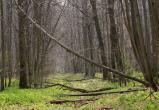 В лесу обнаружен труп мужчины