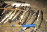 Два рыбака могут отправиться в тюрьму за удачный улов