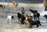 Следователи проводят проверку по факту нападения собак на беременную калужанку