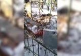 Полиция займётся вандалами, раскопавшими свежую могилу (видео)