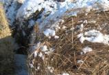 Житель Брянской области украл у калужского фермера сено