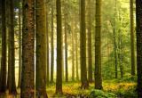 В Калуге обсудили вопрос создания лесопаркового зелёного пояса вокруг города