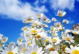 Майские праздники продлятся пять дней