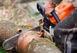 Мигрант незаконно вырубил деревья на миллион рублей