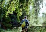 Пропавший в лесу пенсионер жив