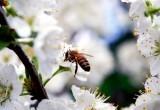 Яндекс разработал карту пыльцы для аллергиков