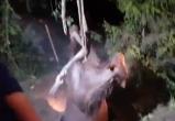 Лошадь свалилась в канализационный люк в Калуге (видео)