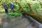 Ветер повалил деревья в Калуге