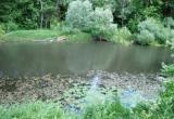 Экстремальное загрязнение реки Суходрев привело к массовой гибели рыбы
