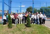 Выпускники высадили деревья около школ