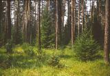 Власти незаконно сдали в аренду калужские леса