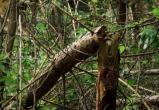 """В нацпарке """"Угра"""" ветер повалил более 200 гектаров леса"""