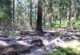 В Калужской области сгорело 4 гектара леса