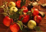 В Калуге пройдёт фестиваль «Калужское яблоко»