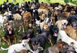 Собаки, на выход! Что сказал суд о резонансном деле по собачьему приюту