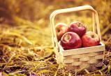 Калужане отпраздновали Яблочный Спас