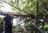 Завалы деревьев на Пятницком кладбище обещали убрать осенью