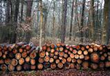 Предприниматель обвиняется в вырубке леса на полтора миллиона рублей